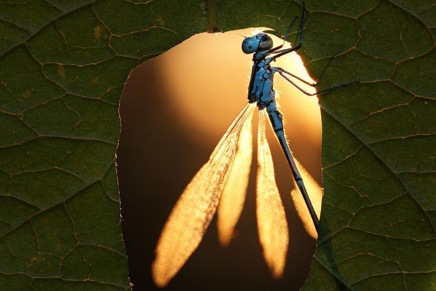 بيئة سحرية من القواقع و الحشرات، باستخدام عدسات الماكرو