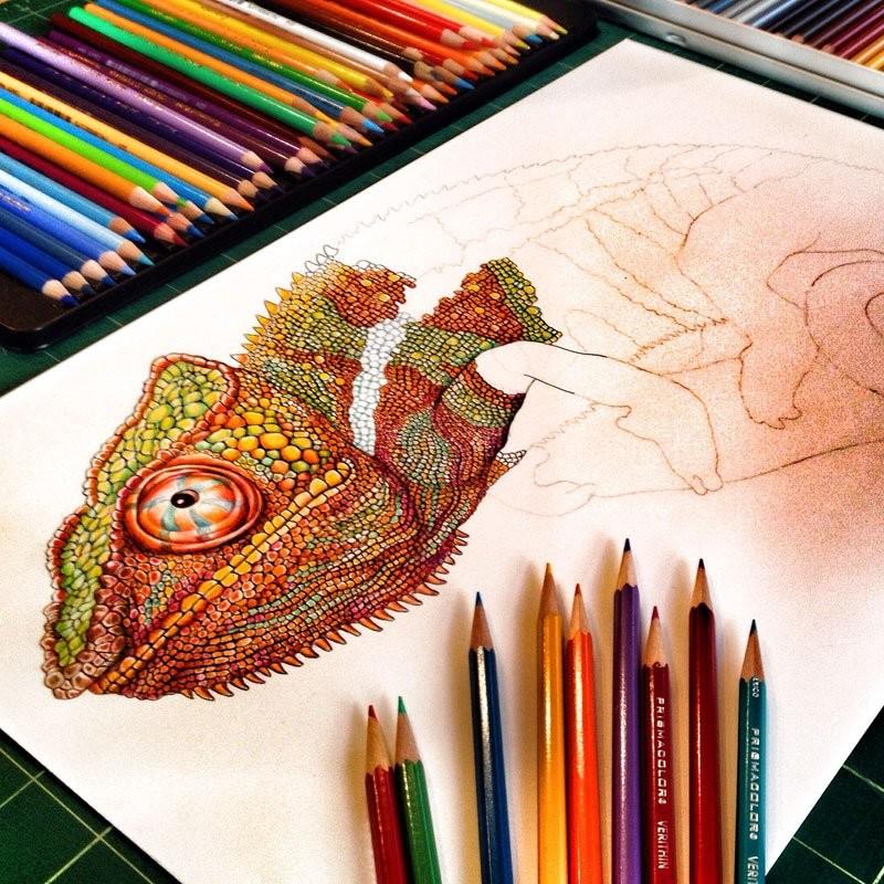 فنان يرسم سحالي مفصلة بأقلام ملونة