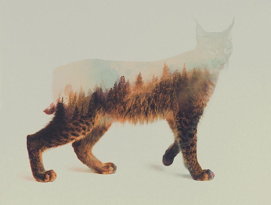 تصوير  بتقنية التعرض المزدوج لحيوانات برية