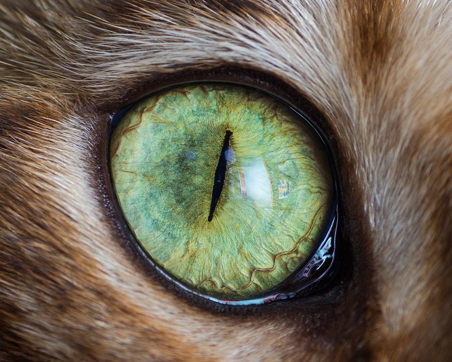 فنان يلتقط صور لعيون القطط بشكل مبدع