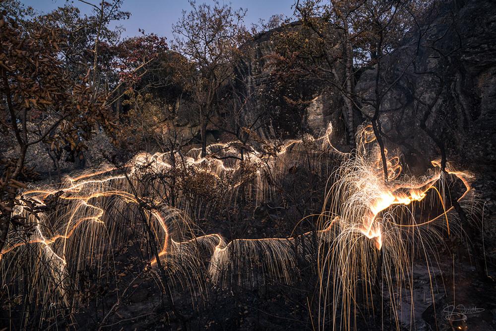أشجار مضيئة رائعة من عمل المصور فيتور سكيتي