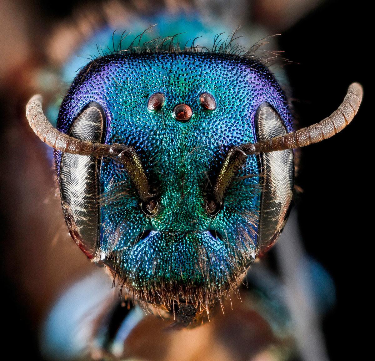 أفضل ٢٥ صورة مقربة لعيون الحشرات
