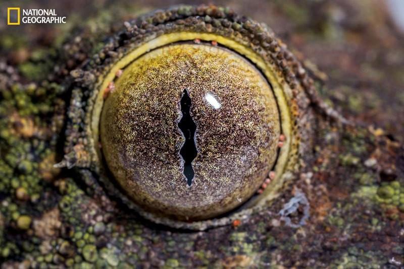 داخل العين: من أجمل المخلوقات في الطبيعة