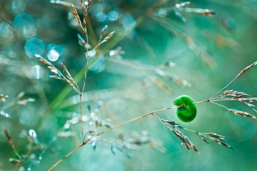 صور تكشف عالم من الخيال في الطبيعة