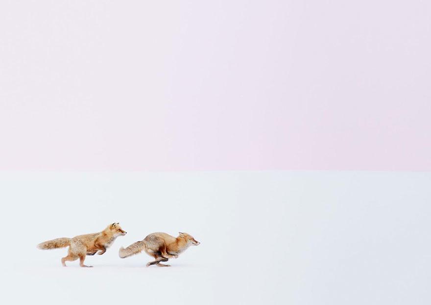 أجمل الصور المتقدمة لمسابقة