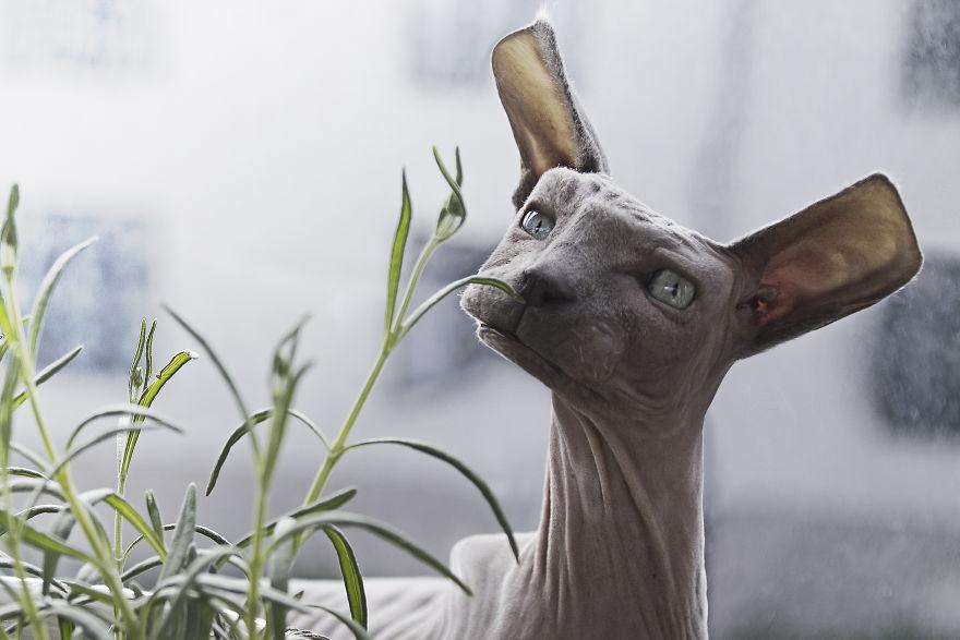 فنان يحول أشكال الحيوانات إلى مكعبات