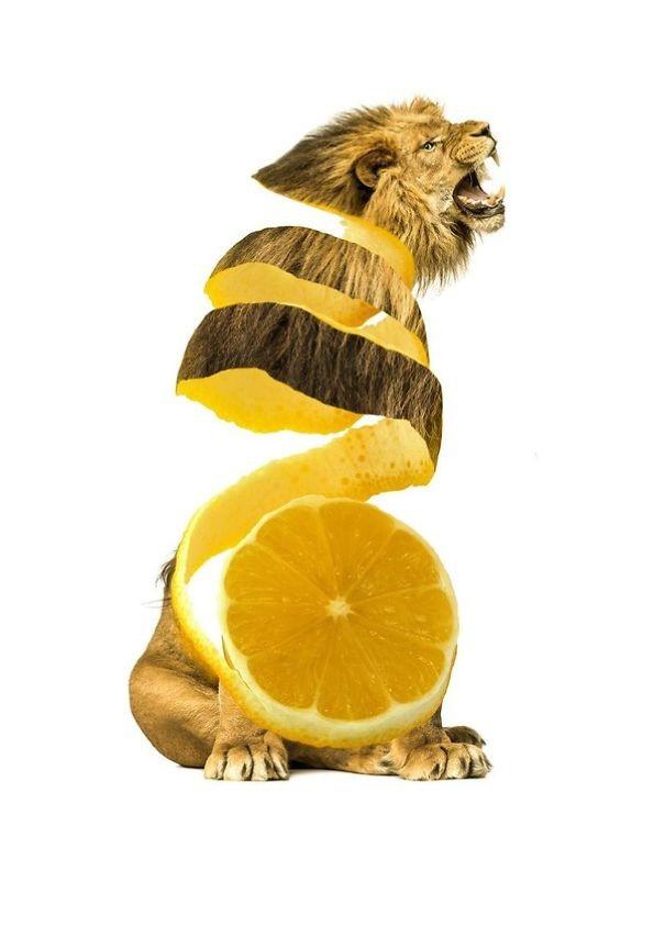 فوتوشوب: مزيج خيالي ما بين الطعام و الحيوانات